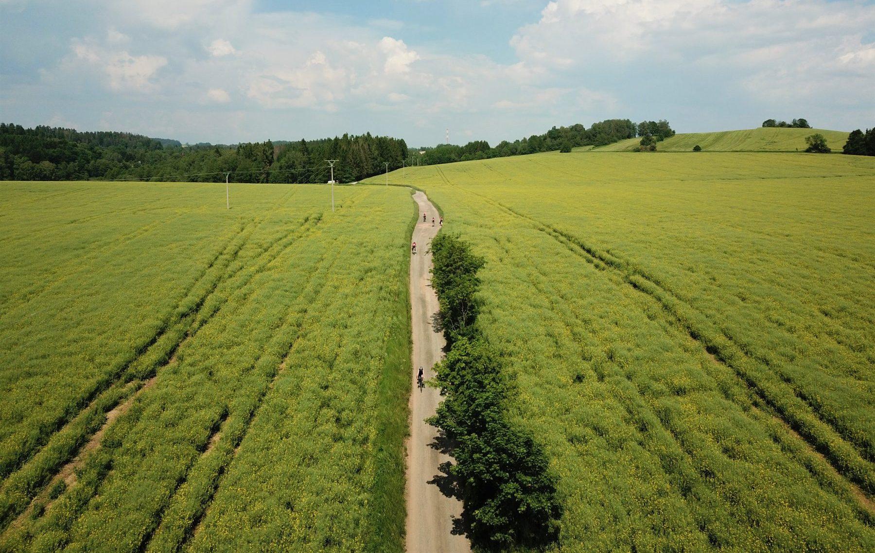 Pyöräilijöitä kapealla tiellä viljelmien keskellä.