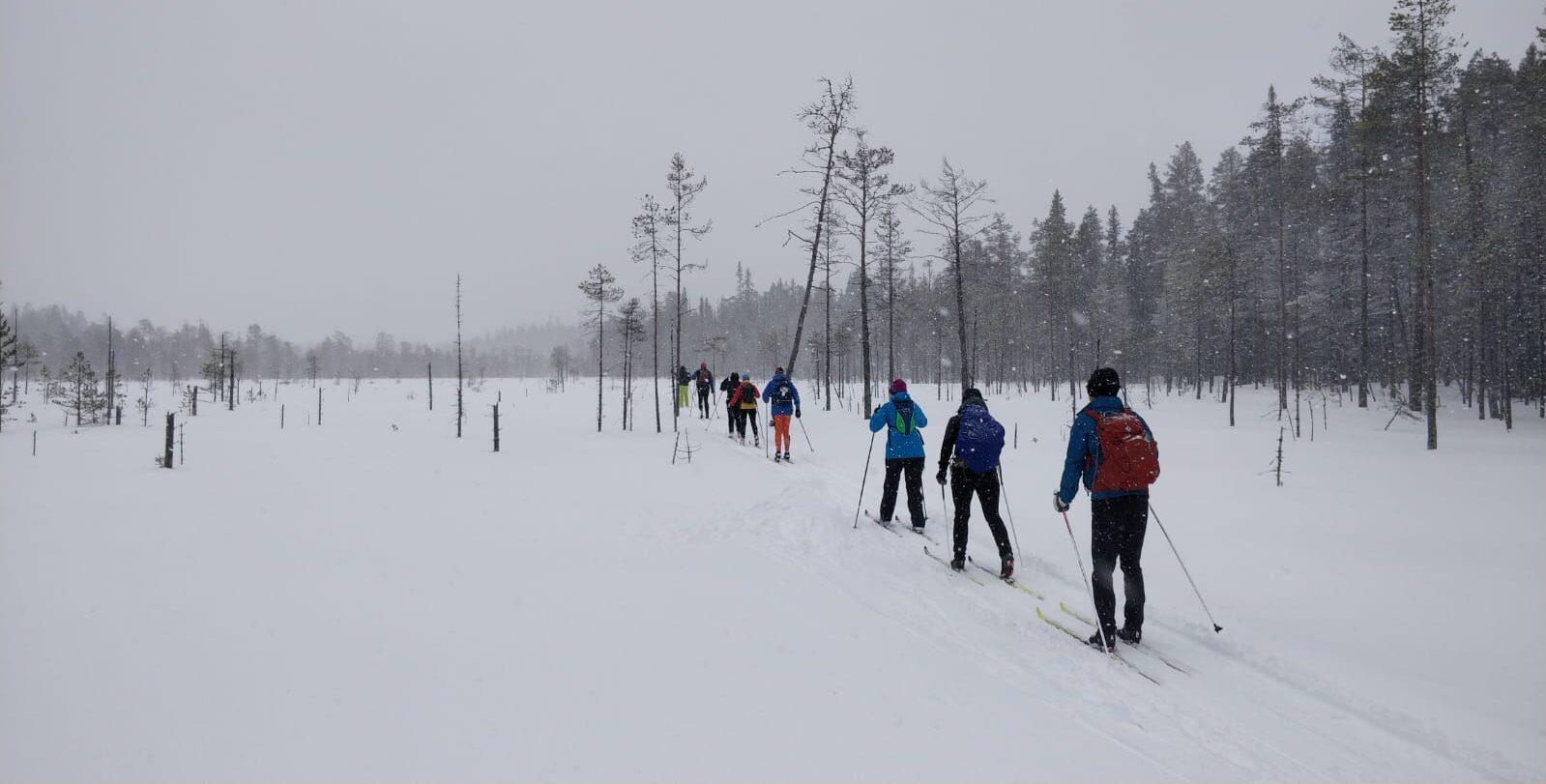 Letka hiihtäjiä hiihtää halki suon kevyessä lumisateessa